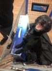 PS4 dog