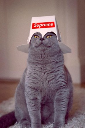 Your feline overlord