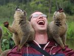 My monkey minions
