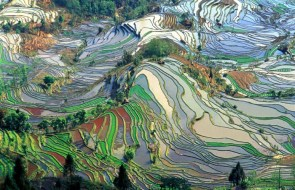Stained Glass Rice Field