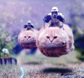 Stormtroopers riding cats