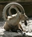 Epic horns