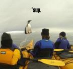 'sup penguin