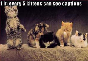 kitten sees captions