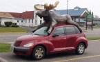 Animal Cars