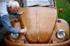 Wood Beetle