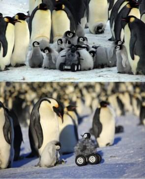 Penguin Rover