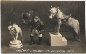 A chimp dressed as Napoleon and dogs dressed as horses (I kid you not)