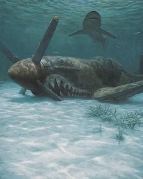 Sunken shark