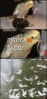 Bomb Parrot