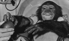 The real space chimp.
