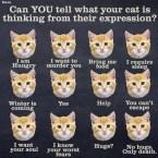 Cat thinks