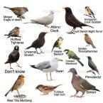 Common Garden Birds