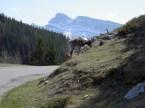 Rocky Mountains wildlife