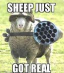 Tactical Sheep