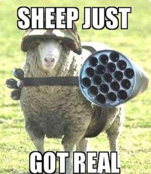 Tactical Sheep