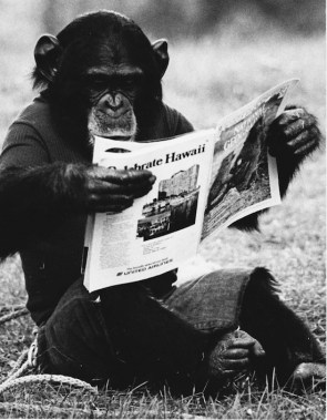 Nim Chimpsky peruses the National Geographic