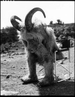 Sad Goat