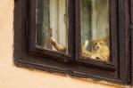 chillen-cat.jpg