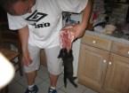 Carnivore Kitten!