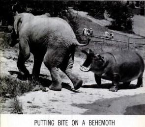 Hippo vs. Elephant