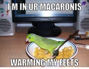 Parakeet Foot Warmer