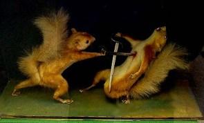 Squirrel Duel