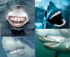 Happy Sharks