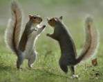 Squirrells.jpg
