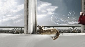 Hi-Rise Kitty Surprise