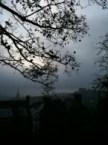 squirrel & fog at dawn