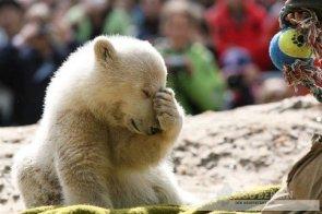 Knut facepalm.