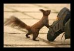 Got any nuts.jpg