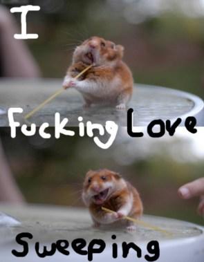Sweeping Hamster