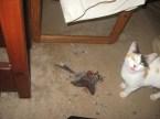 Murder Cat