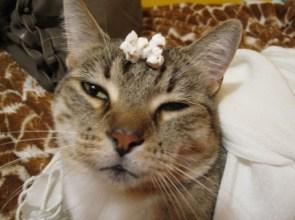 Irritated Cat
