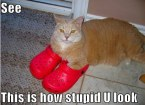 Lolcat and crocs