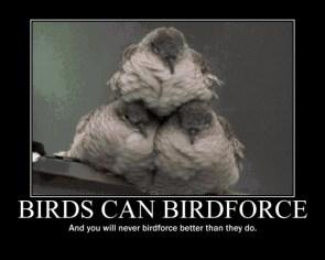 Birdforce