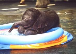 Happy Baby Elephant
