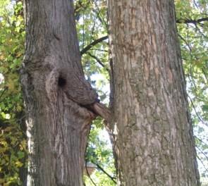 Oral Rape Tree!