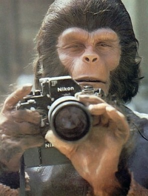 Ape Photographer