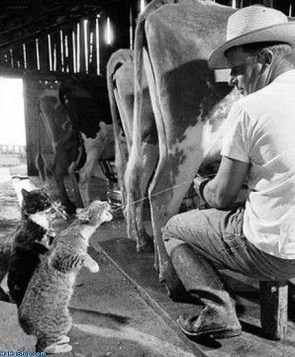 Cat grabs a drink.