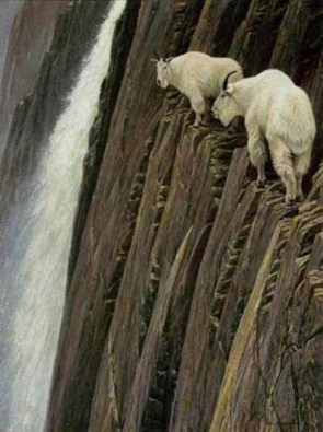 Goats on (Vertical) Walls