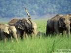 elephant vs croc