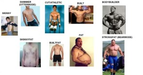 Different types of male bodies