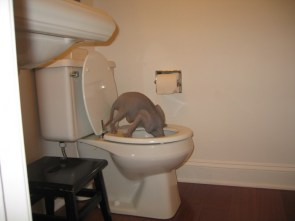 Cat(?) drinking out of toilet