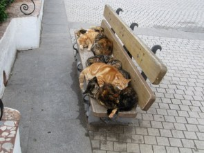 Cats On A Bench