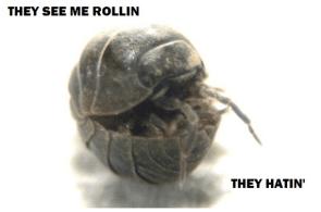 Rollin` Hatin` Pillbug