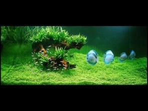 Stunning Nature Aquariums