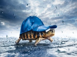 Happy turtle in the rain
